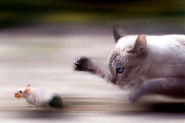 gato-raton-2